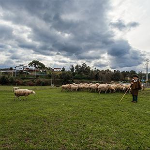 Roteiro do Queijo Serra da Estrela - fotografia 360º e panorâmica - visita virtual